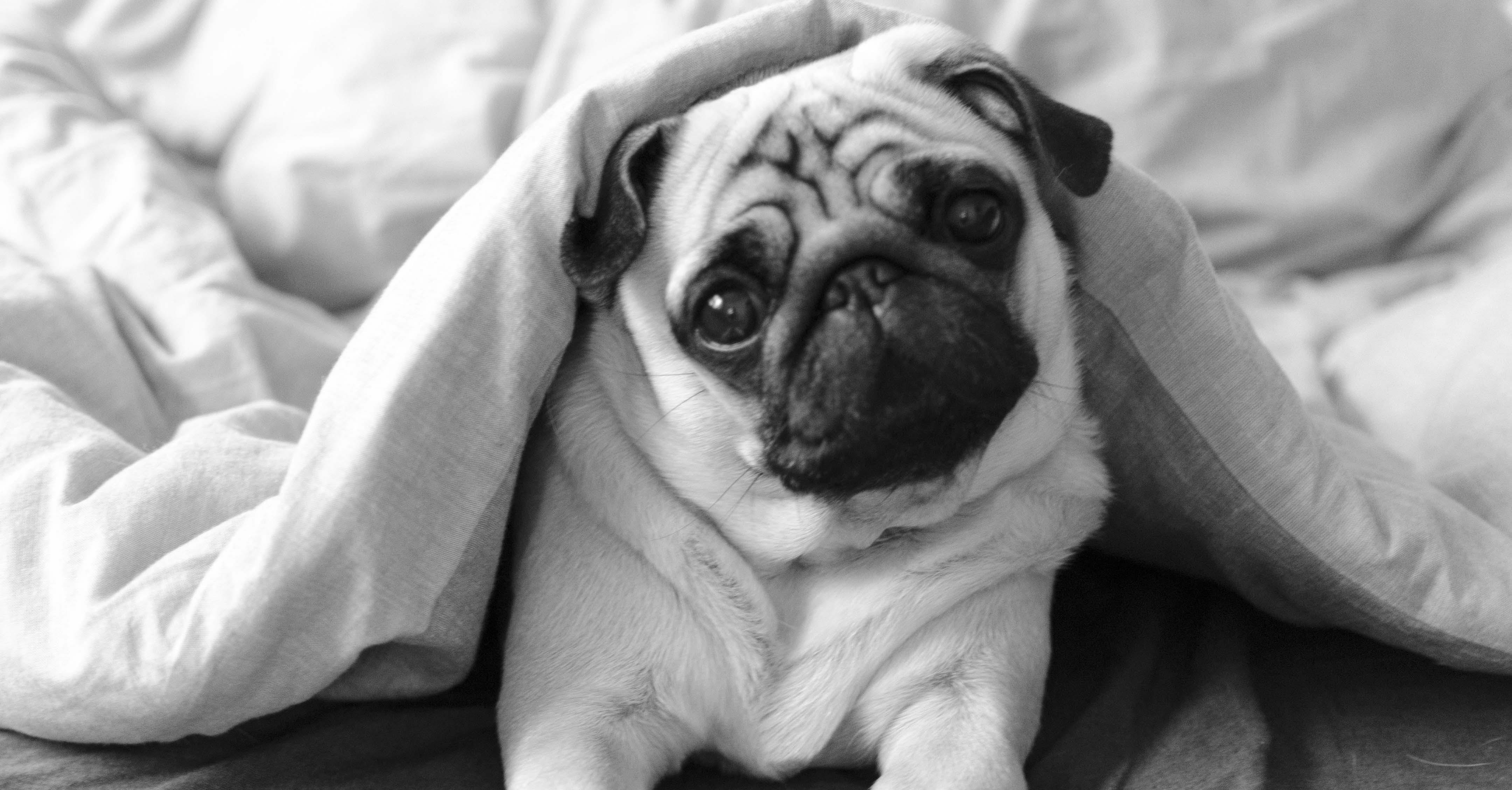 Hundehalter_SEO---Kopie.jpg
